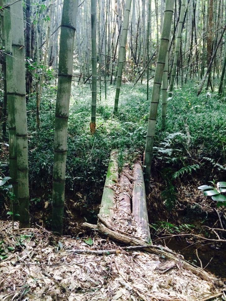呼吸する大地 よみがえる森 矢野智徳さん大地の再生講座開催決定!